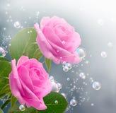 桃红色玫瑰 向量例证