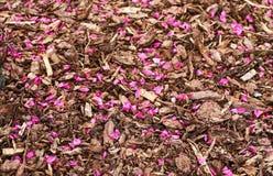 桃红色瓣下落在腐土上报道了地面 库存图片
