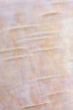 桃红色白桦树皮 免版税图库摄影
