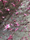 桃红色白色小的花 库存照片