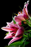 桃红色百合花束 库存图片