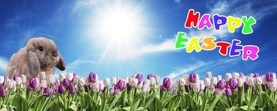 桃红色的兔宝宝和在草原蓝色晴朗的天空的招呼白色的郁金香愉快的东部文本英语 库存图片