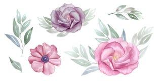 桃红色的葡萄酒和紫色花水彩集合 罗斯和银莲花属开花 问候,邀请,婚礼,生日贺卡 免版税库存照片