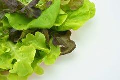 桃红色盘子的沙拉绿色素食主义者隔绝有白色背景 免版税库存照片