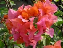 桃红色纸蝴蝶 库存图片