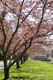 桃红色结构树 免版税图库摄影