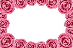 桃红色罗斯框架 库存照片