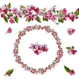 桃红色罗盘星座花手拉的色的剪影在白色背景的 苹果树开花的早午餐的花卉构成  向量例证