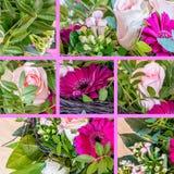 桃红色美丽的花拼贴画  免版税库存图片