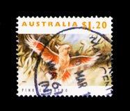 桃红色美冠鹦鹉(Kakatoe leadbeateri),濒于灭绝的物种serie, c 免版税库存照片