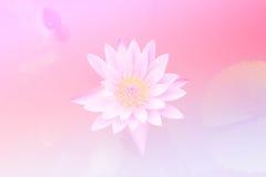 桃红色美好的软的颜色和蓝色开花背景自然-莲花 免版税库存照片