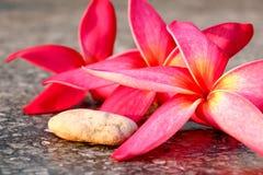 桃红色羽毛和岩石对背景541 库存图片