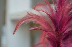桃红色羽毛喷粉器 免版税图库摄影
