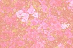 桃红色背景,扩展五颜六色的花背景 图库摄影