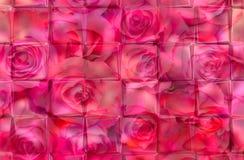 桃红色背景 库存图片