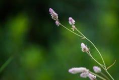 桃红色花以绿色 图库摄影