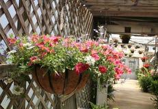 桃红色花卉垂悬的篮子 库存照片