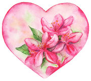 桃红色花卉百合浪漫爱心脏 图库摄影