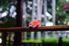 桃红色花卉结束阳台 库存例证