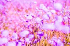 桃红色花和模糊的背景 库存图片