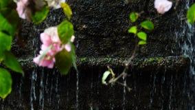 桃红色花和瀑布