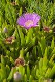 桃红色花和钉子在自然生态环境 免版税库存照片