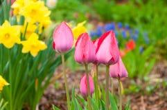 桃红色花和绿色叶子在蓝天 库存图片