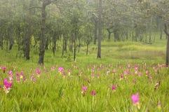 桃红色花和绿色领域 免版税图库摄影