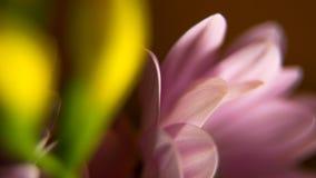 桃红色花和黄色年轻芽 库存图片