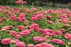 桃红色花园 免版税库存照片