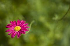 桃红色花在一个豪华的绿色庭院里 免版税库存照片