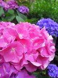 桃红色花在一张绿色床上在庭院里 免版税库存图片