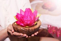 桃红色花在手中,荷花或者莲花 图库摄影