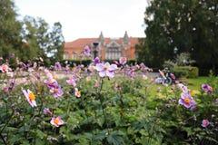 桃红色花在花圃里在丹麦犹太人前面的庭院里 库存图片