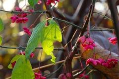 桃红色花在11月 免版税库存图片