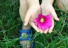 桃红色花对于儿童手 r ?? r 库存照片
