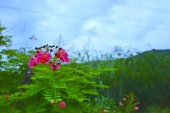 桃红色花是自然 免版税库存图片