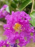 桃红色花有blured背景 库存照片