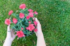 桃红色花用女性手 库存照片