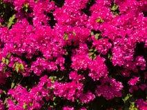 桃红色花的关闭是beautyful明亮的 库存照片
