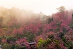 桃红色花美好的背景 库存照片
