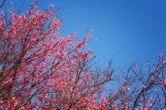 桃红色花美好的背景 免版税库存照片