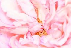 桃红色花背景,宏指令 库存图片