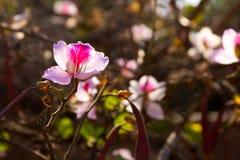 桃红色花自然 库存照片