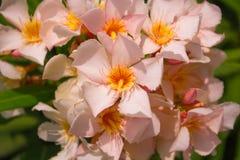 桃红色花花束与闭合的花的 库存图片