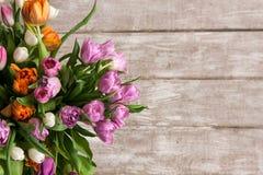 桃红色花郁金香框架  背景细部图花卉向量 免版税库存图片