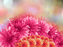 桃红色花,在红色桃红色被弄脏的背景 特写镜头 花拼贴画 免版税库存照片