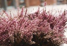 桃红色花,有选择性的软的焦点,浅景深,葡萄酒口气 免版税图库摄影