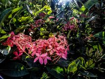 桃红色花,绿叶,太阳上升,自然看法,庭院 库存图片