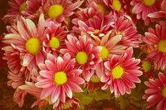 桃红色花,葡萄酒过滤了颜色 库存图片